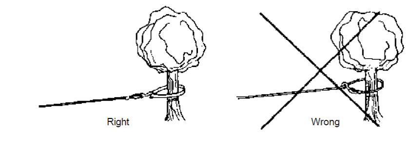 Das Seil einer Winde richtig am Baum befestigen